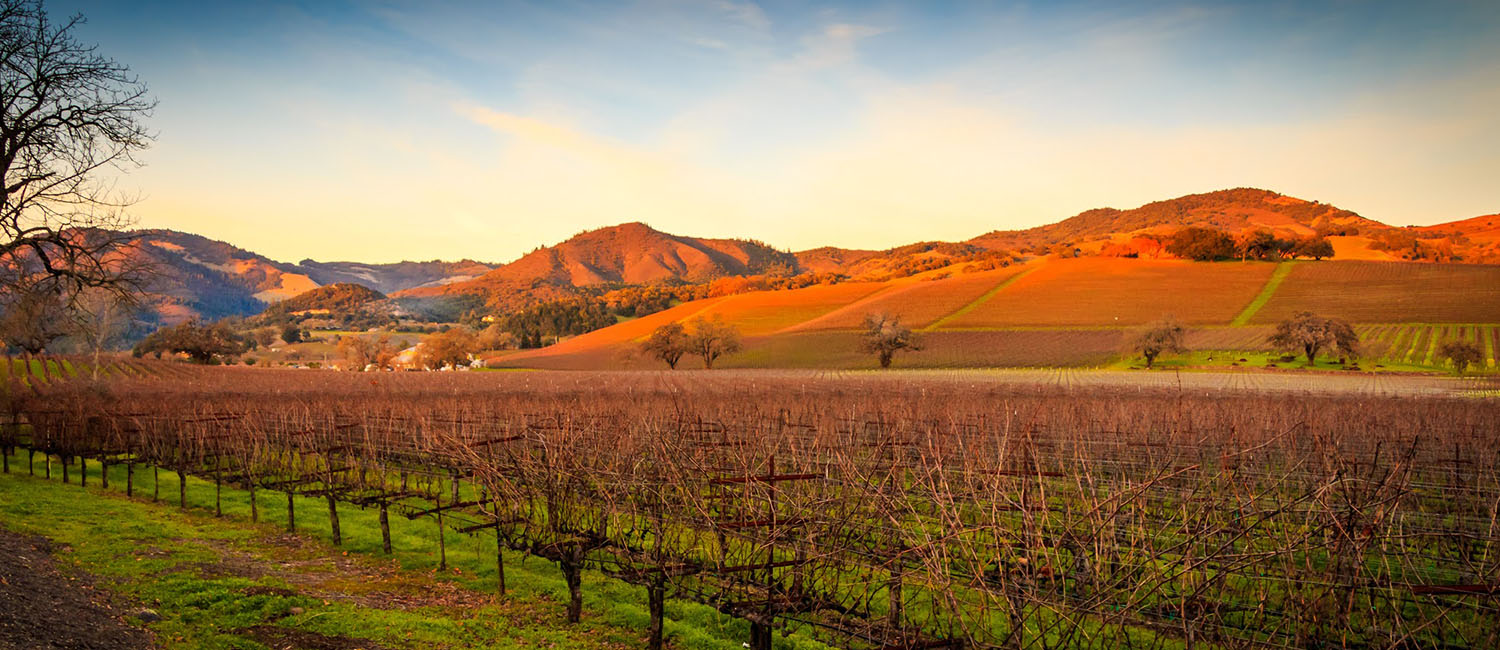 NESTLED WITHIN THE HEART OF SONOMA COUNTY